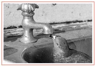 bird-water-black-and-white