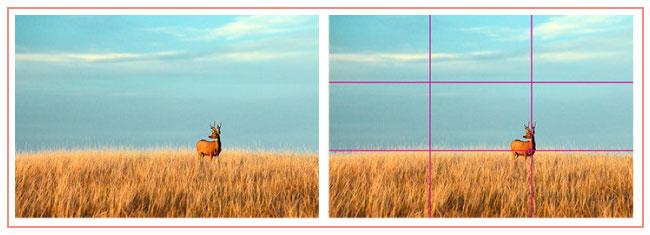 deer-field-rule-of-thirds