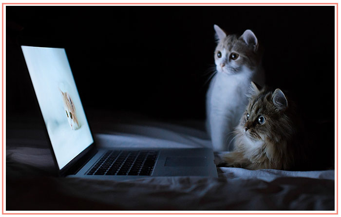 cats-laptop-bright-light