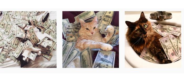 cash cats