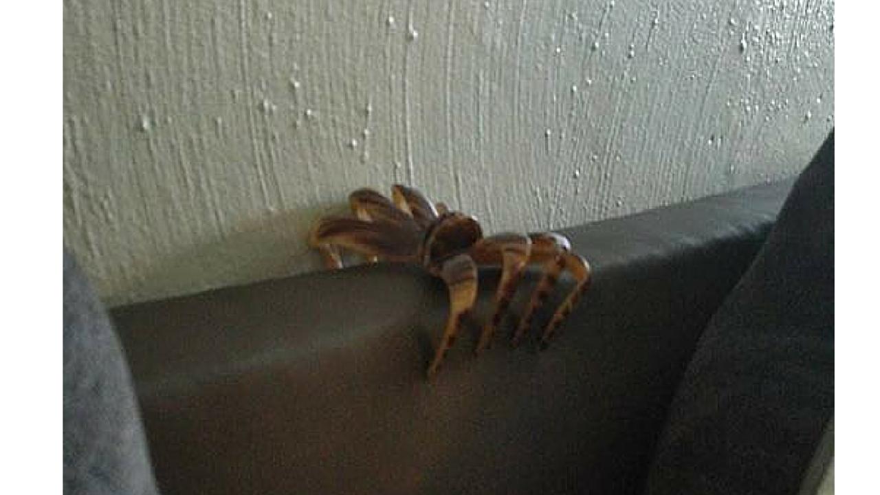 Hair Clip Spider